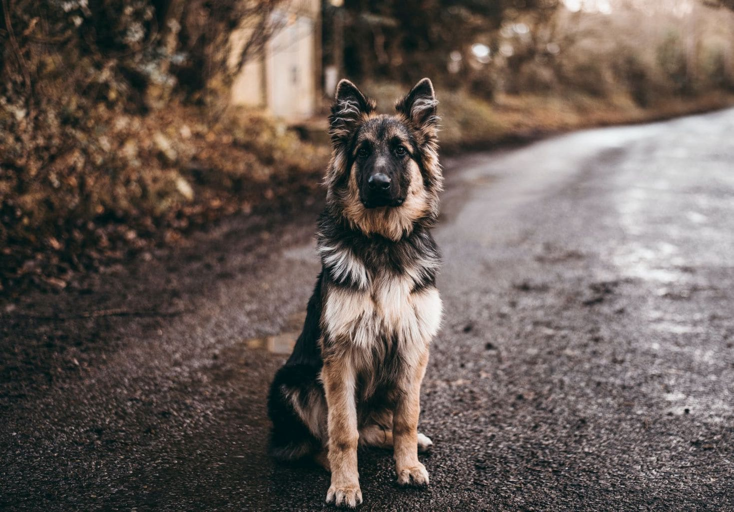 Dog hashtags - German Shepherd