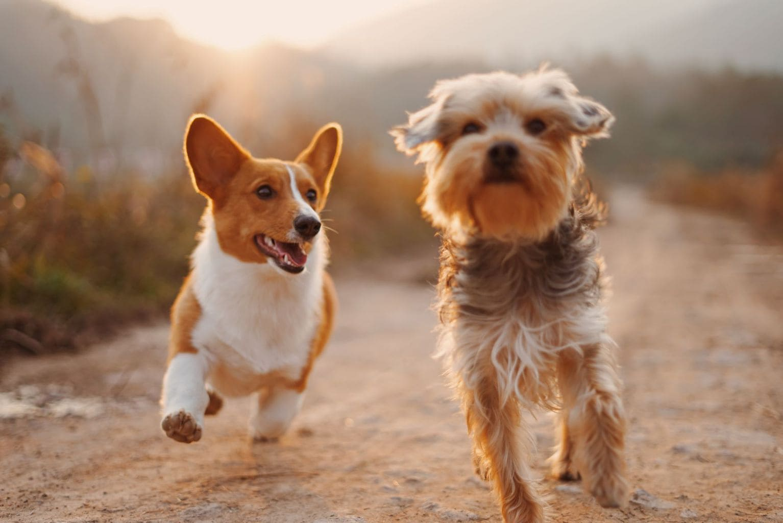 Dog hashtags - two dogs playing