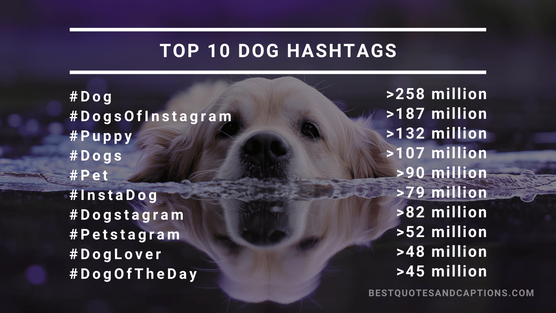 Top 10 dog hashtags