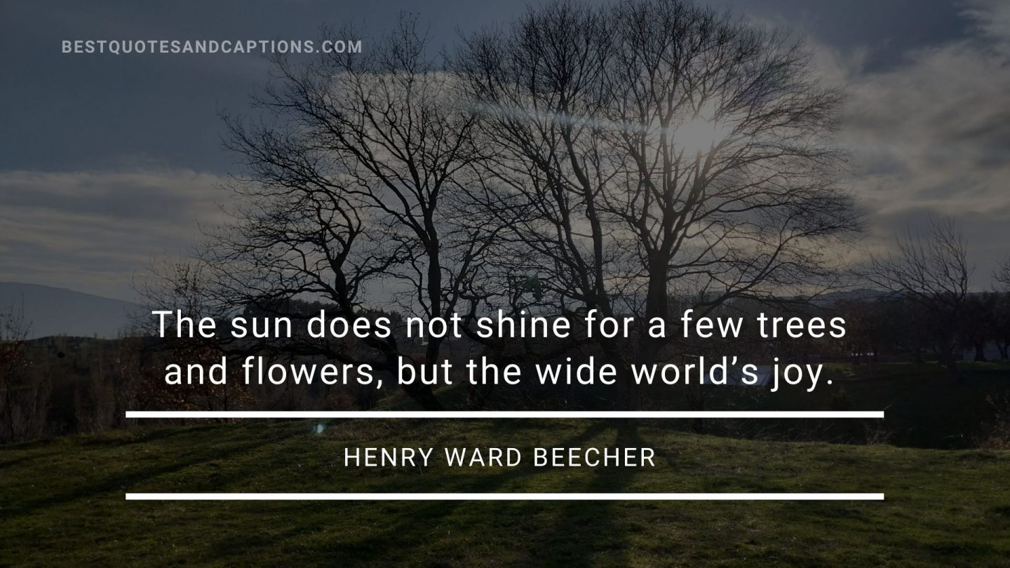 Tree and sun quotes - Henry Ward Beecher